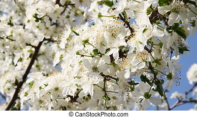 Springtime Tree Flowers