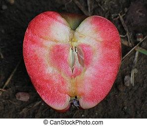 cruza-seção, Amor, maçã, vermelho