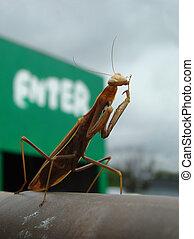 praying mantis - the praying mantis invites you to enter at...