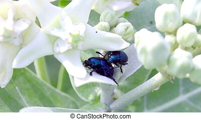 Insects on white flowers
