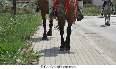 horses parading