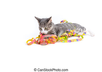 sweet kitten - little grey tiger kitten playing with party...