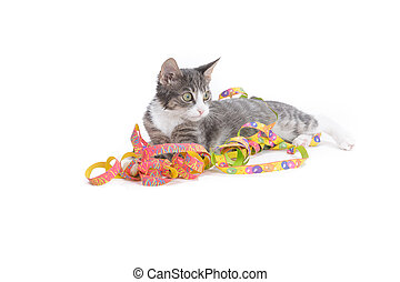 festivity with cat - little grey tiger kitten playing with...