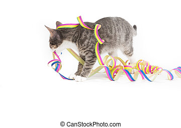 preparing decoration for party - little grey tiger kitten...