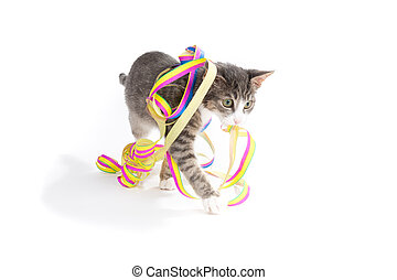 coming soon - little grey tiger kitten playing with party...