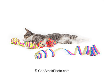 celebrate you - little grey tiger kitten playing with party...