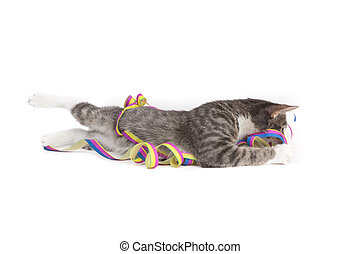 fun with decoration - little grey tiger kitten playing with...