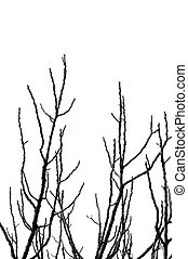 tree branches silhouette - Leafless tree branches silhouette...