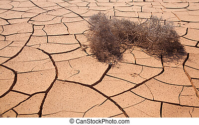 Natural background of cracked earth with dry tumbleweed...