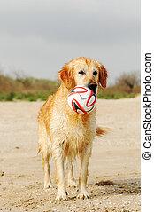 Dog with a ball on the beach