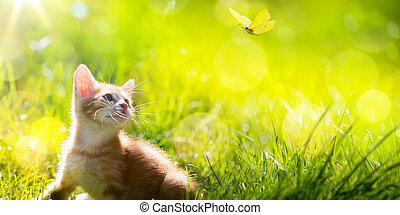 Art little kitten hunting a butterfly - Art little ginger...