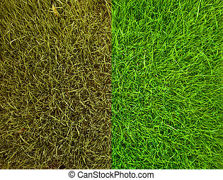 Two kind of green grass texture background