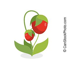 Red strawberries with green stems. Juicy Berry with leaves on a white background. Vector illustration of a garden of fruit.