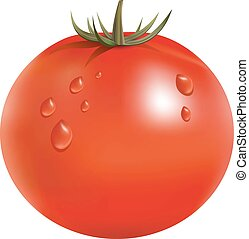 Vector illustration of big ripe red fresh tomato