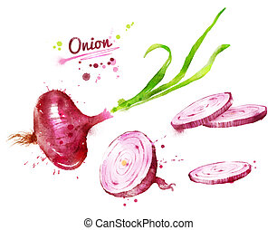 Red onion - Hand drawn watercolor illustration of red onion...
