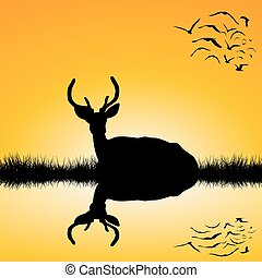 Landscape with deer stag silhouette at sunset