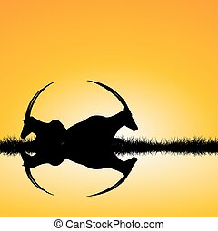 Landscape with two antelopes silhouettes on sunset