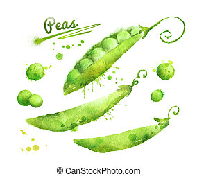 Watercolor peas. - Hand drawn watercolor illustration of...