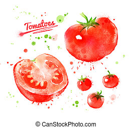 Watercolor tomatoes. - Watercolor hand drawn illustration of...