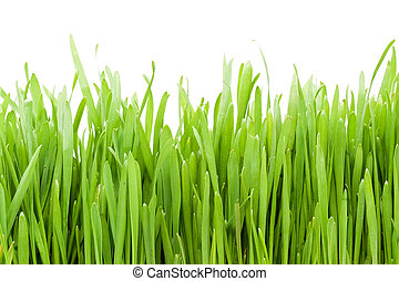Grass - Fresh green grass on white background