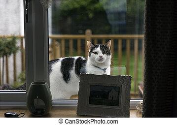 Cat looking in a window - Shot of a cat looking in a window