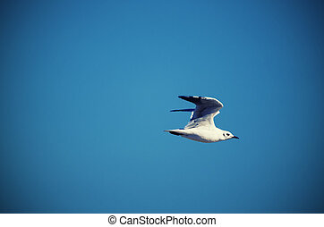 Sea gull - Single white gull flying against blue sky,...