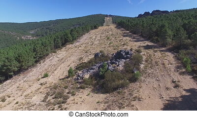Entering firebreak, aerial view with pine tree forest and...