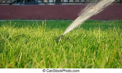 Sprinkler irrigation Sprinkler system working on lawn -...