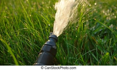 Macro of watering plant pipe Agriculture Sprinkler sysytem...
