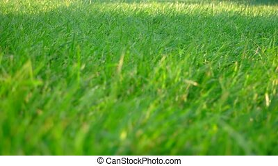 green grass with blurred foreground and falling drops of water on background