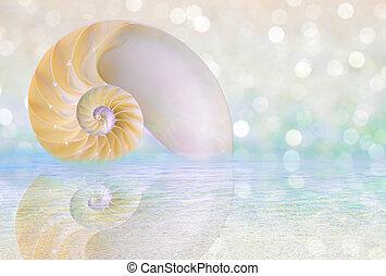 Nautilus shell cut - Chambered Nautilus cutaway Shell on...