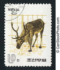 postmark - NORTH KOREA - CIRCA 1966: The polar deer eats a...