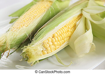 Ear of corn - Whole fresh raw corn on the cob with husk