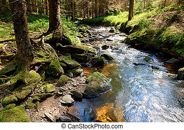 The primeval forest with the creek - HDR - The primeval...