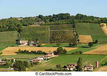 Piacenza Vineyards view - In the picture a beautiful view of...
