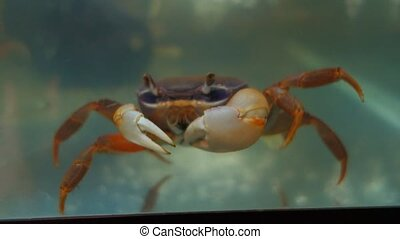 Crab in the aquarium