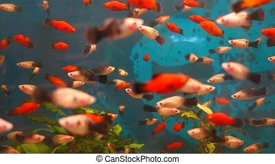 Exotic fishes