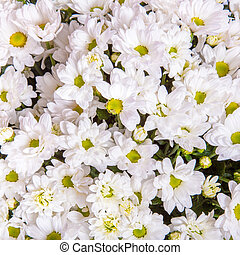 Abstract background of flowers Close up