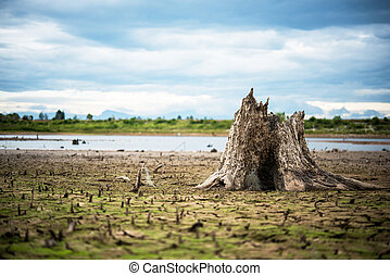 Stump with cracked mud in the bottom of a river showing drought