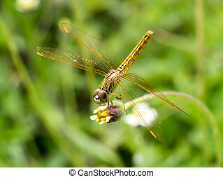Close up of dragonfly on flower grass - Close up of yellow...