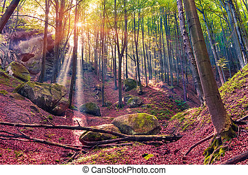Autumn morning in mystical woods.
