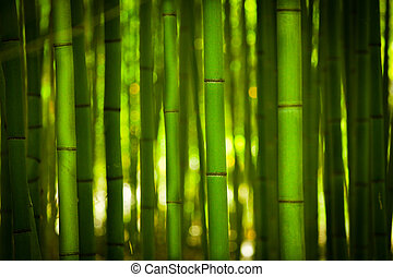 The Bamoboo forrest - A bright green bamboo forrest.