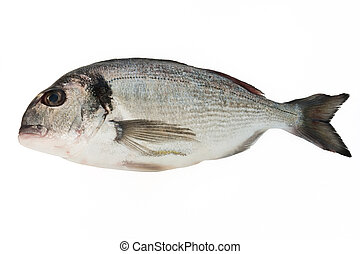 sea bream - fresh sea bream isolated on white background
