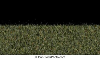 fresh spring grass,depth of field,3D animation,HD 1080p TIP