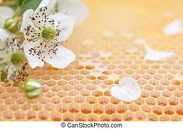Honeycomb empty and full of honey - Yellow sealed honeycomb...