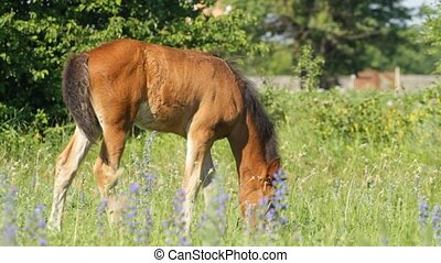 Horse baby pasture on a green grass