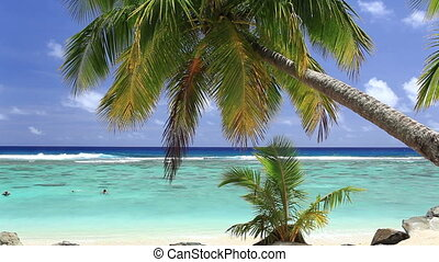 Waves on a tropical beach with palm