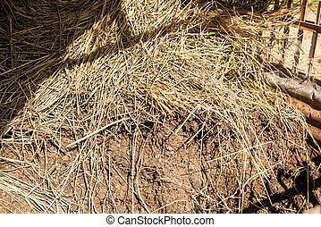 manure, fertilizer for plants