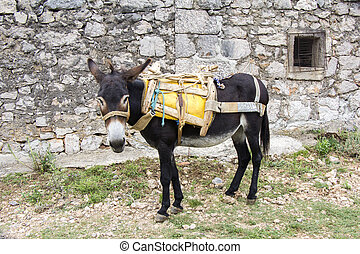 Young donkey tied up in an old stone house