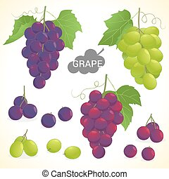 Set of grape in various styles vector format